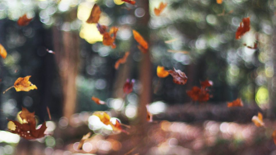 4 Simple Detox Tips to Reset for Fall